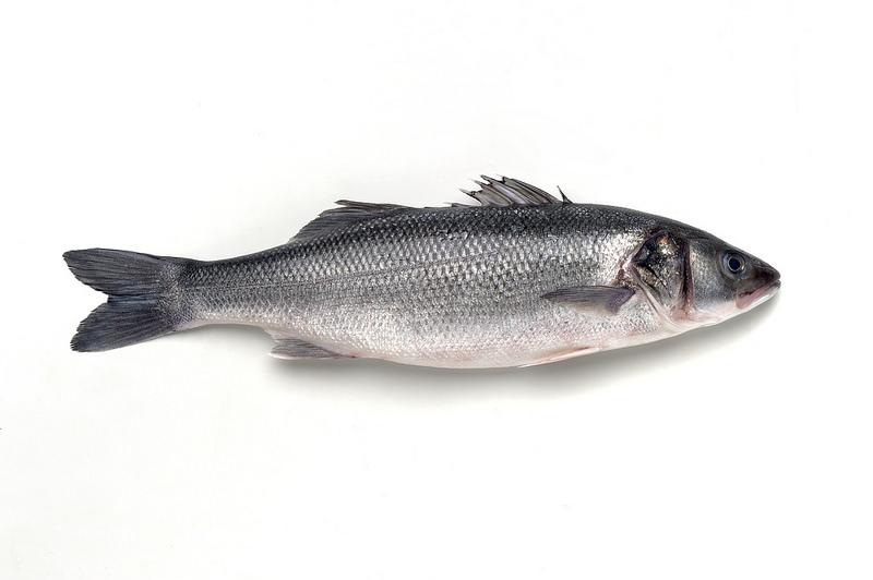 Saiba mais sobre o robalo, o peixe destaque do mês